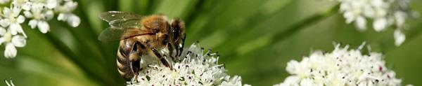 Honig- und Wildbieneninteressierte gesucht!