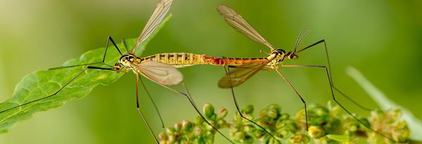 Inektenvielfalt – Kleine Tiere, große Leistung