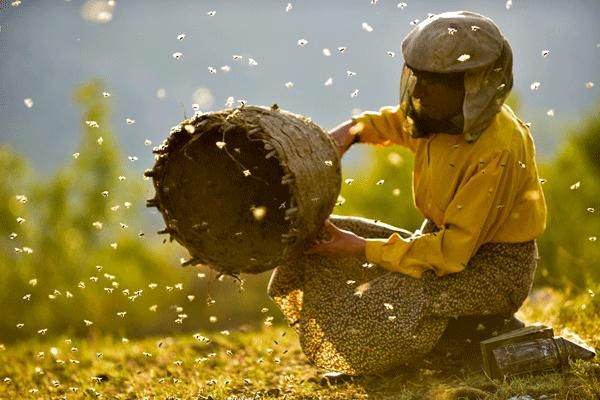 Honeyland-Dokumentarfilm
